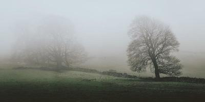A hilly countryside covered in fog