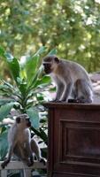 Two monkeys in a garden