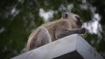 Looking up at a monkey