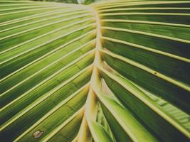 Natural coconut leaves close-up