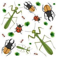 Conjunto de diferentes insectos sobre fondo blanco.
