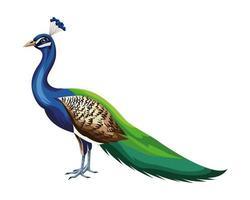 pájaro pavo real de dibujos animados