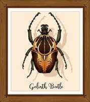 escarabajo en marco de madera