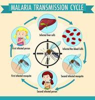 infografía de información del ciclo de transmisión de la malaria