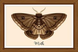 polilla en marco de madera