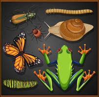 Set of different insects on black background vector