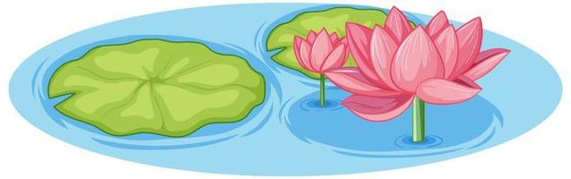 Pink lotus with green leaf in water vector