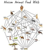 African animal food web on white background