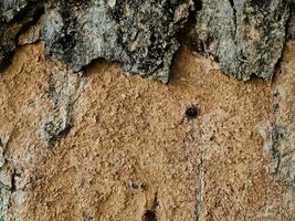 Oak tree bark texture