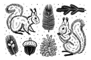 Hand drawn squirrel and forest elements vector