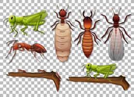 conjunto de diferentes insectos aislados sobre fondo transparente