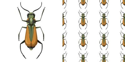 Insecto Malaquio Aeneo y fondo transparente vector