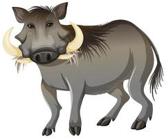 Front of wild boar in standing position on white background