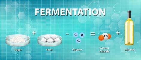Alcoholic fermentation chemical equation vector