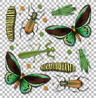 Set of different insects on transparent background vector