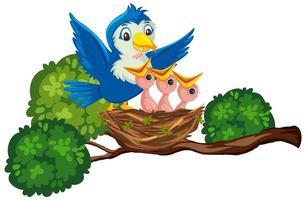 Mother bird feeding chicks vector
