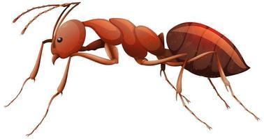 Cerca de hormiga roja en estilo de dibujos animados sobre fondo blanco.