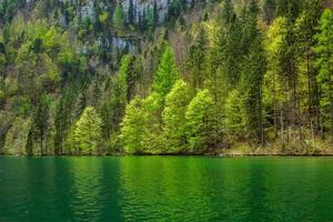 Green trees reflecting in lake