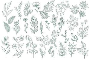 conjunto de elementos de contorno decorativo de flores silvestres vector