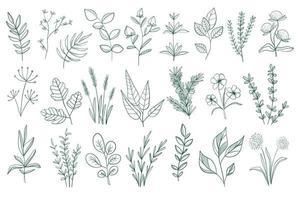 paquete de elementos decorativos florales vector