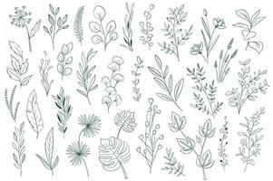 Botanical elements, outline graphic pack