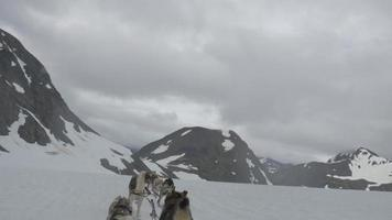 Ein Team von Schlittenhunden zieht den Fahrer durch das eisige Gelände von Alaska 4k