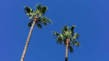 palmeras en el viento 4k