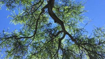 rama de árbol en el sol 4k
