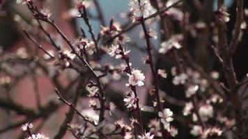plink Blumen