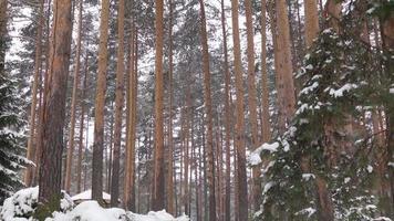 árboles bajo el cielo