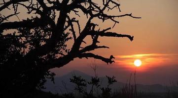 puesta de sol con sombra de árbol stock video