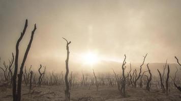 sfondo vivente di polvere del deserto 4k