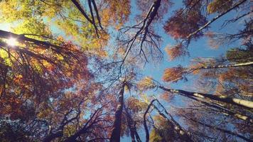 otoño bosque 4k fondo vivo