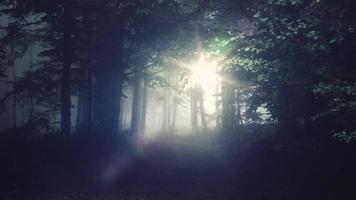 forêt calme 4k fond vivant