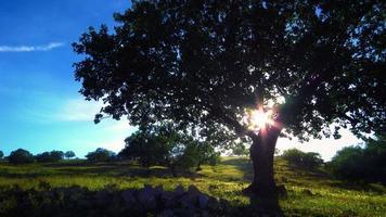 árvore ensolarada 4k fundo vivo