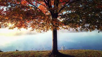 Baum Teich 4k lebenden Hintergrund video