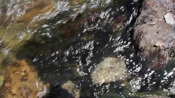 a água flui ao redor da rocha em um riacho video