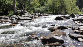 rápidos de agua en un arroyo stock video