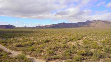 paso elevado aéreo del campo de cactus del desierto en 4k video