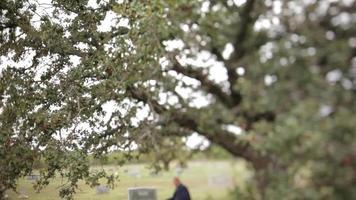 Árbol del cementerio con un hombre sentado en segundo plano. video