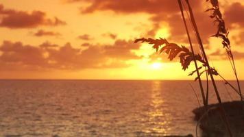 Seehafer im Sonnenuntergang