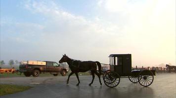 Amish Pferd und Wagen