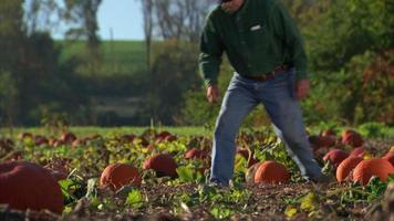 contadino controlla il terreno nel campo di zucche