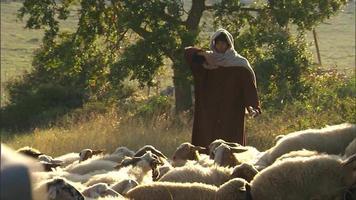 Hirten, die Schafe in Matera Italien hüten