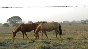cavalos video