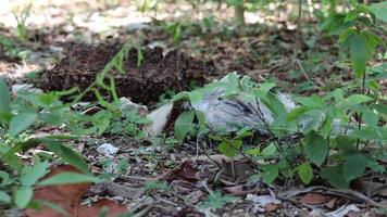 iguana comiendo hojas en el bosque