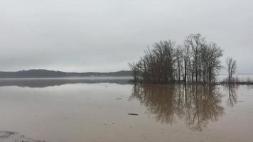 Misty lakeside scene showing trees submerged in murky water and flotsam and detritus video