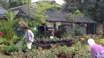 granja de flores en malasia
