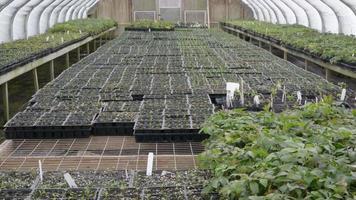 A static scene in a greenhouse
