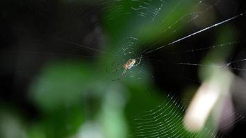 die kleine Spinne